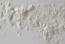 Bellingham drywall mold removal